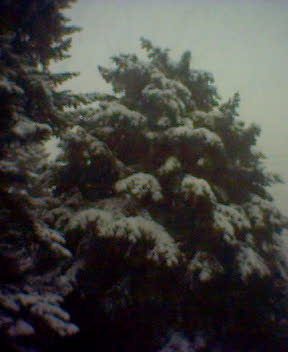First *real* snowfall!